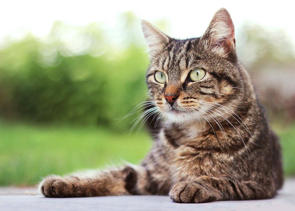 nouveau chat Nouvea10
