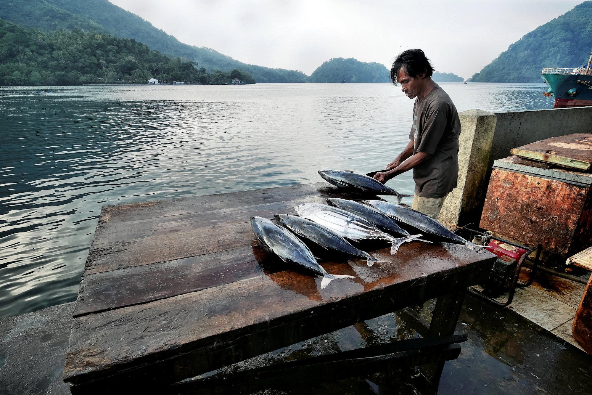 Retour de pêche P1090310