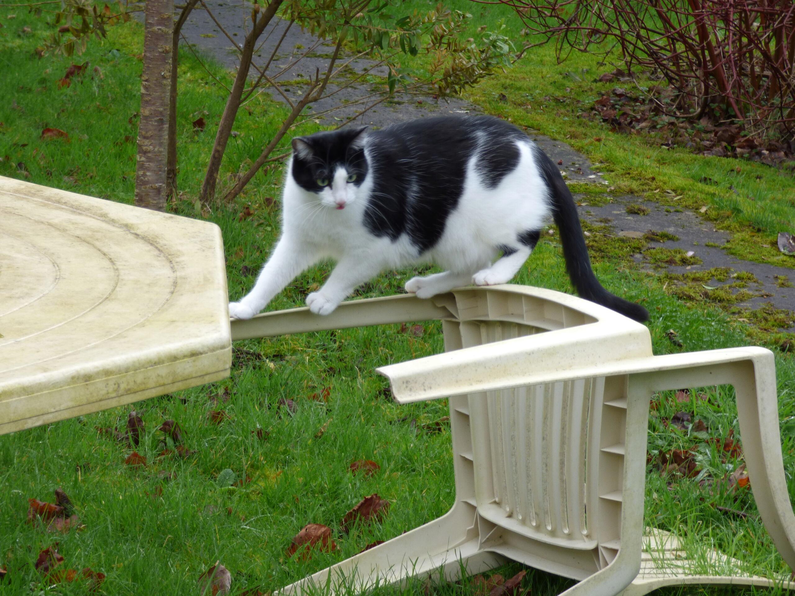 Un chat en quilling Coumel11