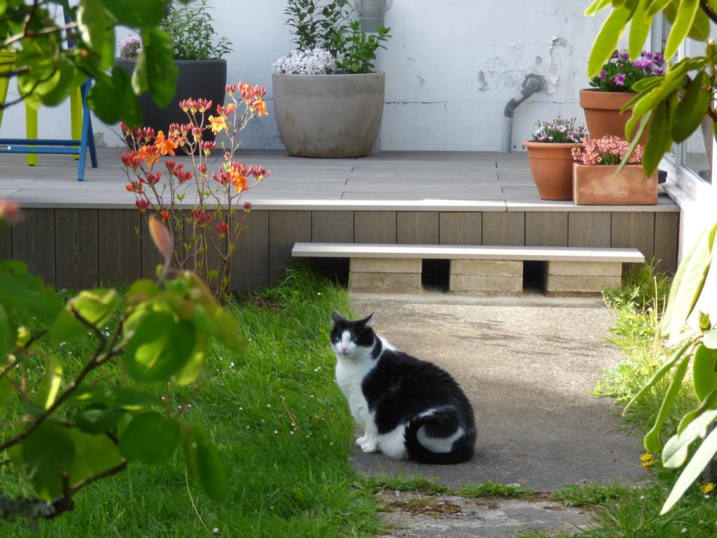 Mon beau jardin - Page 2 P1110110