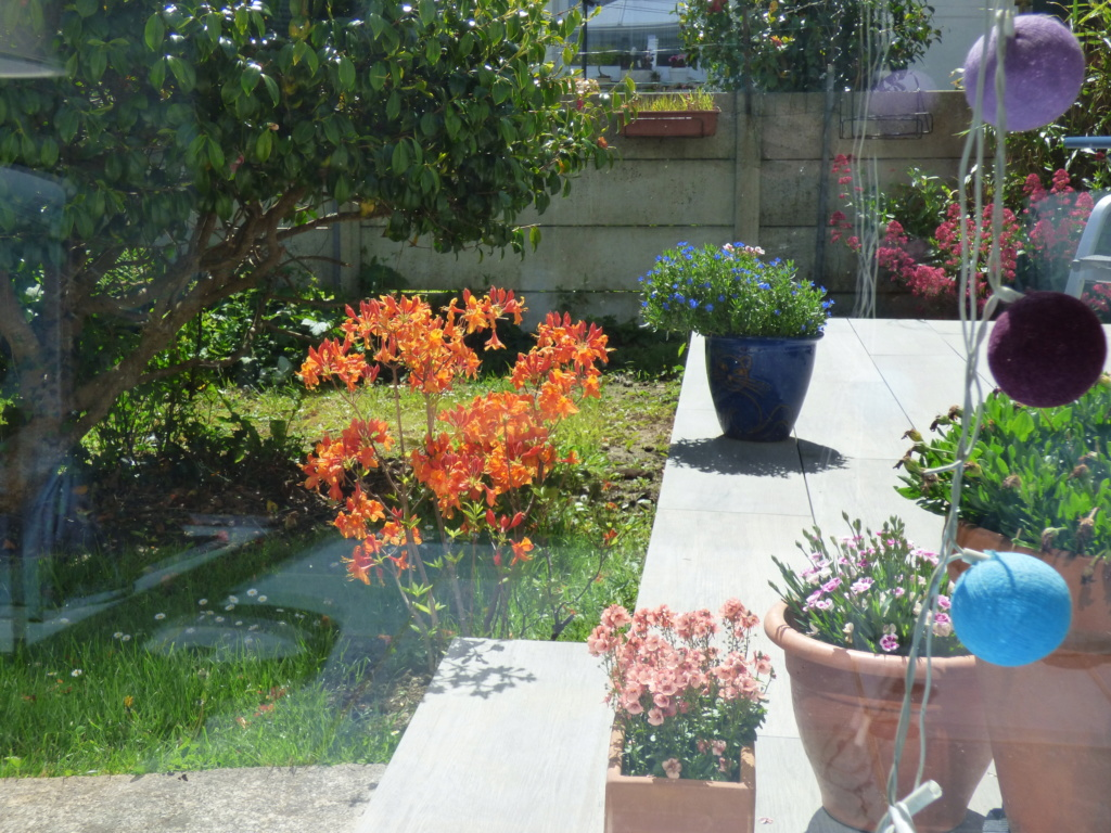 Mon beau jardin - Page 2 P1110210