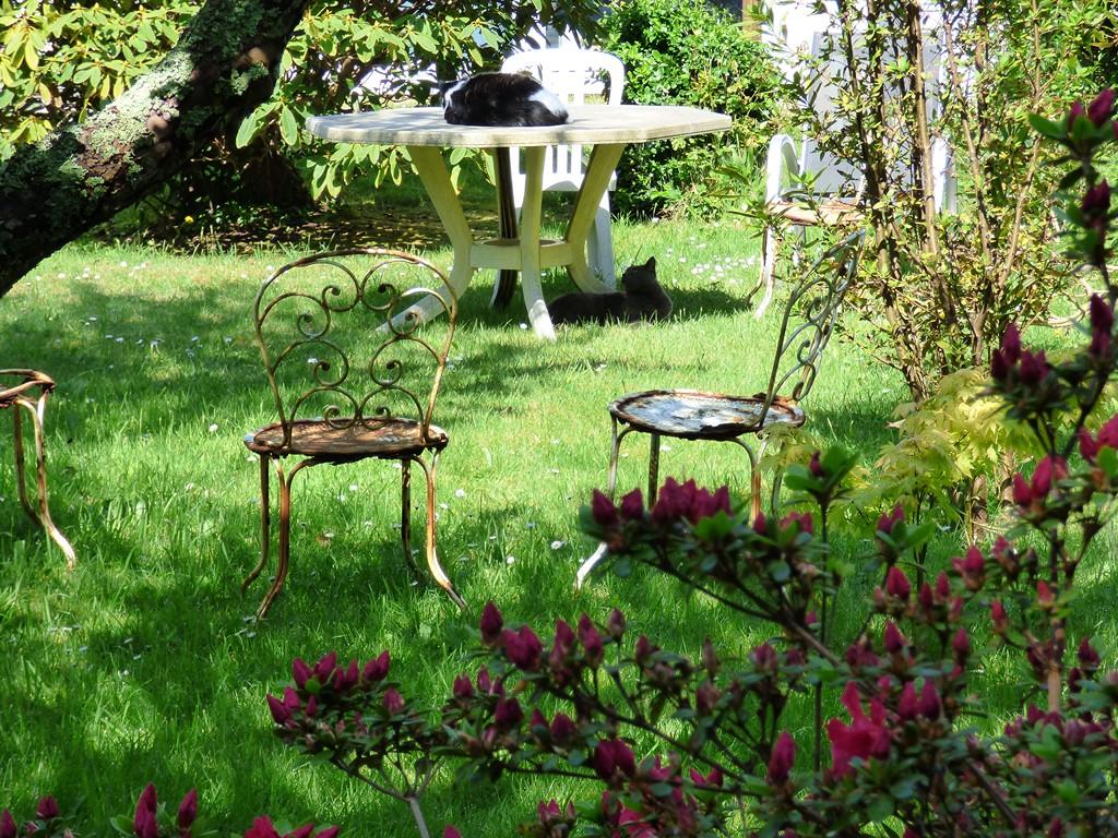 Mon beau jardin P1120013