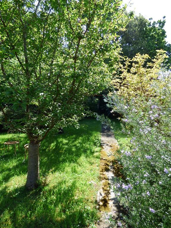 Mon beau jardin P1120016