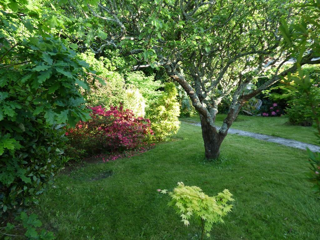 Mon beau jardin - Page 2 P1120025