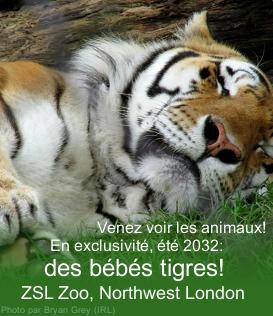 La Gazette - Edition Juillet Pub110