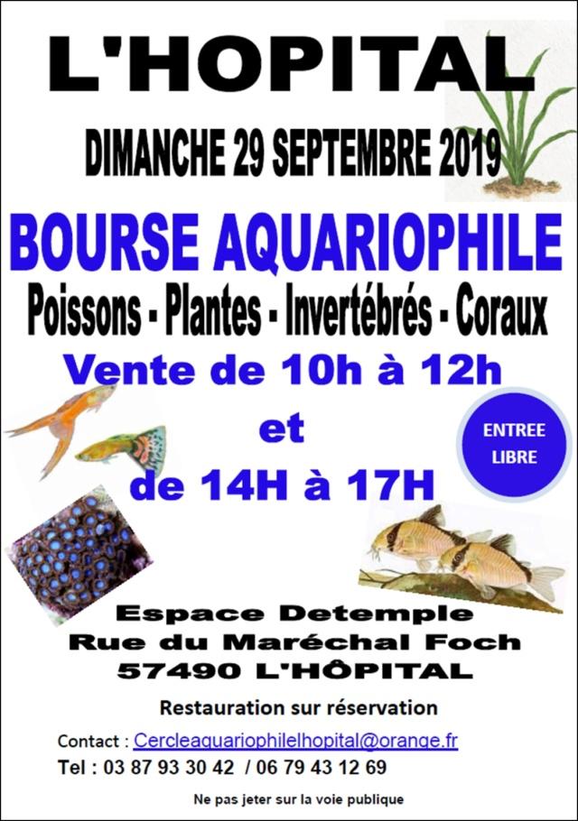 Bourse de L'Hôpital (57) - 29 septembre 2019 Bourse13