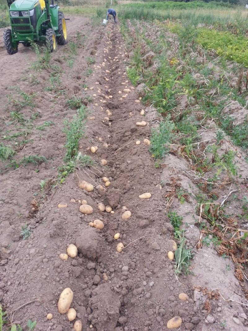 Les patates 2018  - Page 2 20180713