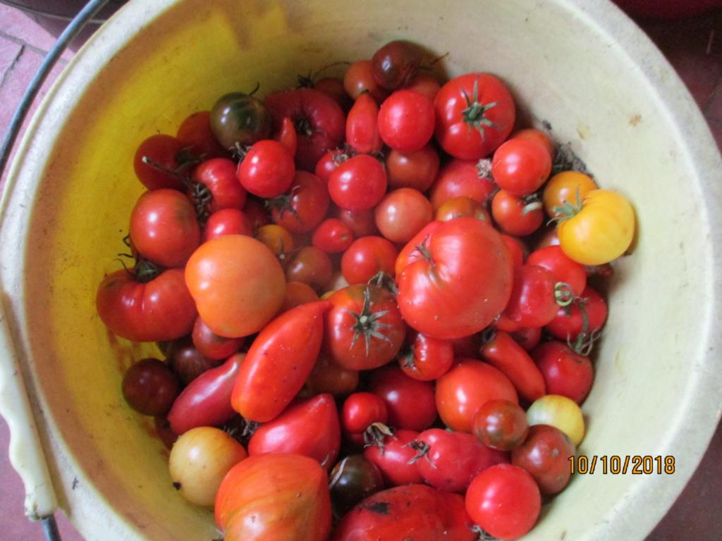 Tomates 2018 - Page 17 Img_0313