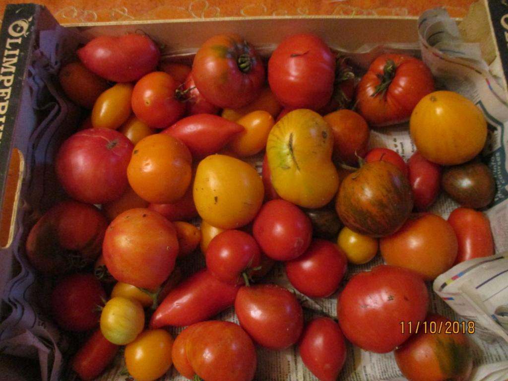 Tomates 2018 - Page 17 Img_0315