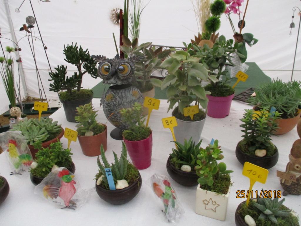 Présentation de tous nos cactus et succulentes  Img_0546
