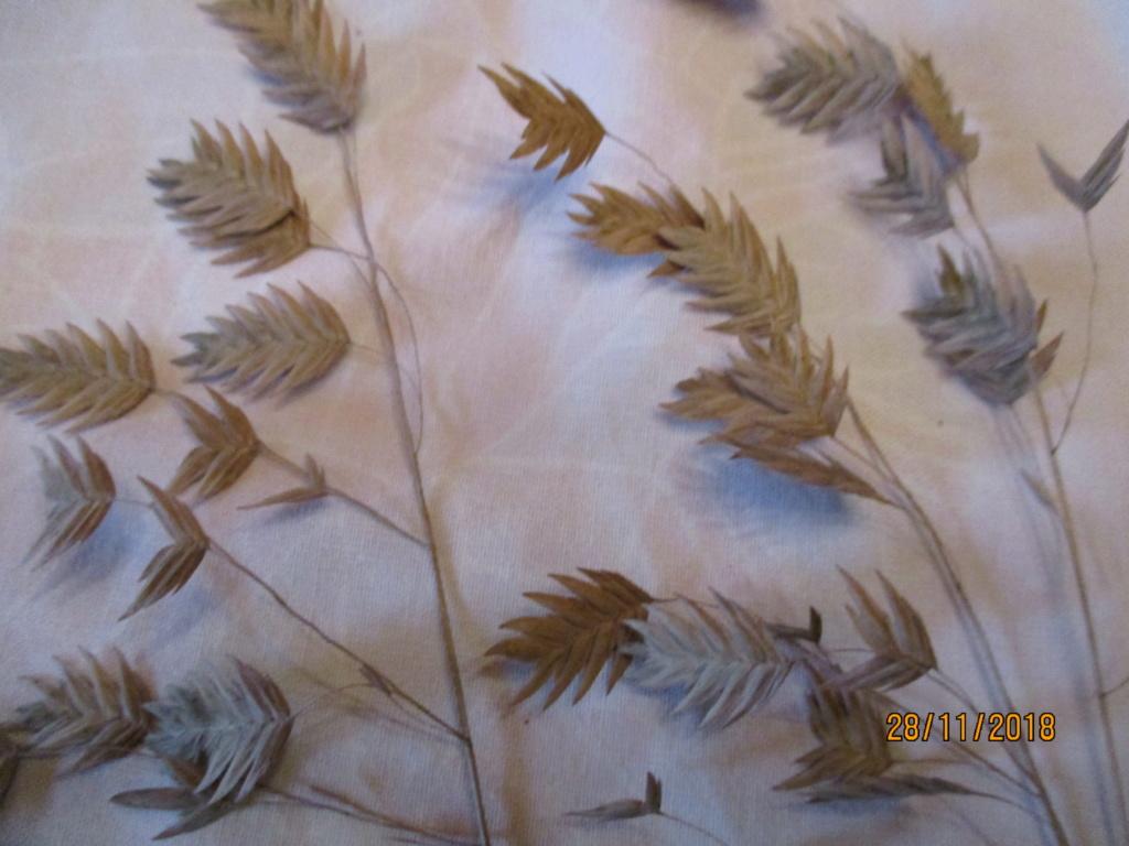 chasmanthium latifolium Img_0556