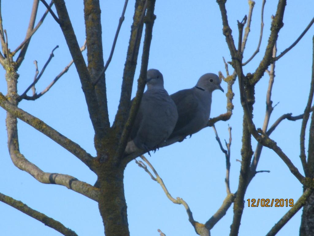 les oiseaux et petites bêtes au cours de nos balades - Page 24 Img_0826