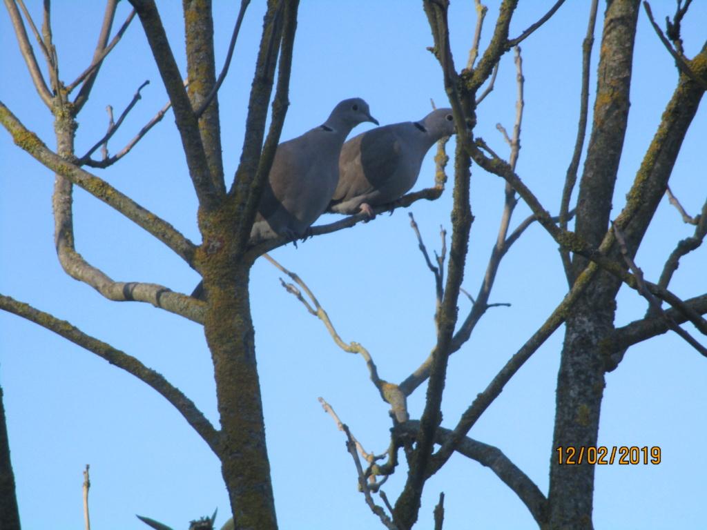 les oiseaux et petites bêtes au cours de nos balades - Page 24 Img_0827