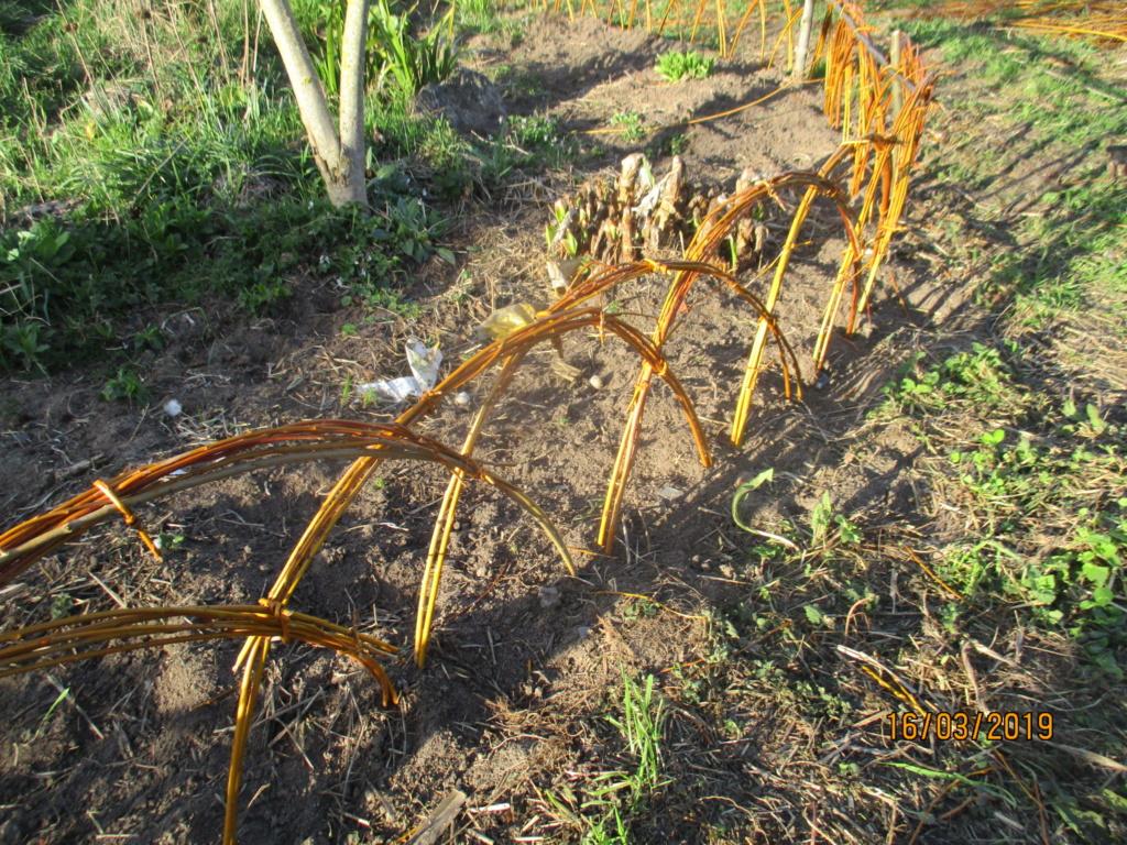L'osier au jardin : plessis - haie végétale - cabane - tipi - Page 2 Img_0928