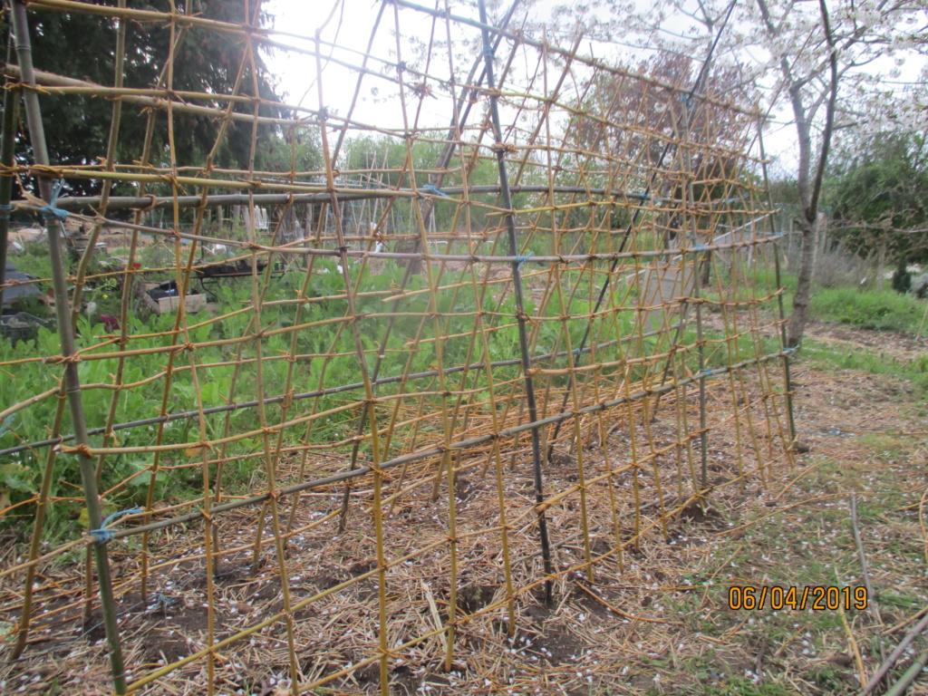 L'osier au jardin : plessis - haie végétale - cabane - tipi - Page 2 Img_1121
