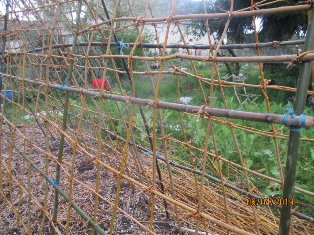 L'osier au jardin : plessis - haie végétale - cabane - tipi - Page 2 Img_1122
