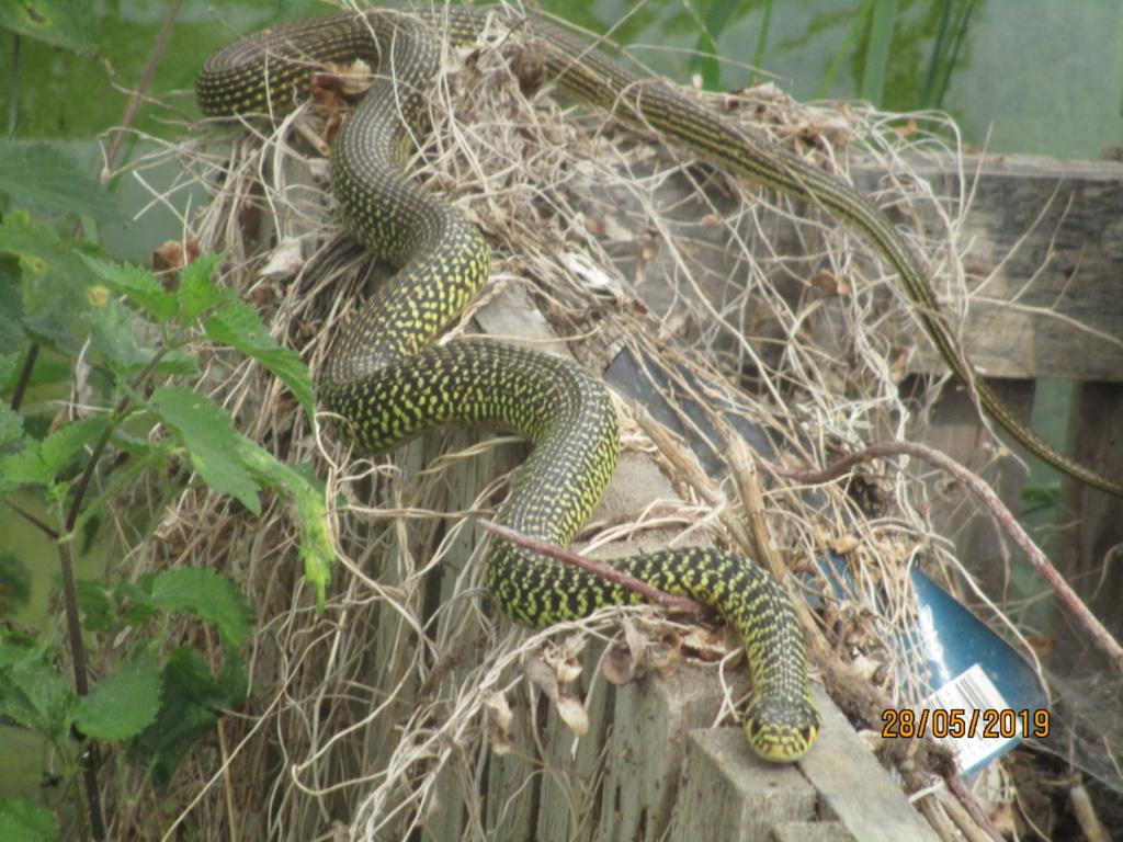 les oiseaux et petites bêtes au cours de nos balades - Page 31 Img_2011