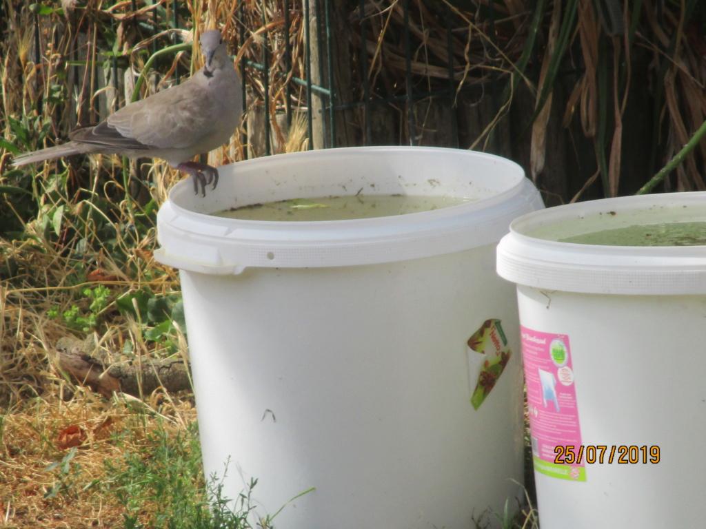 les oiseaux et petites bêtes au cours de nos balades Img_2617
