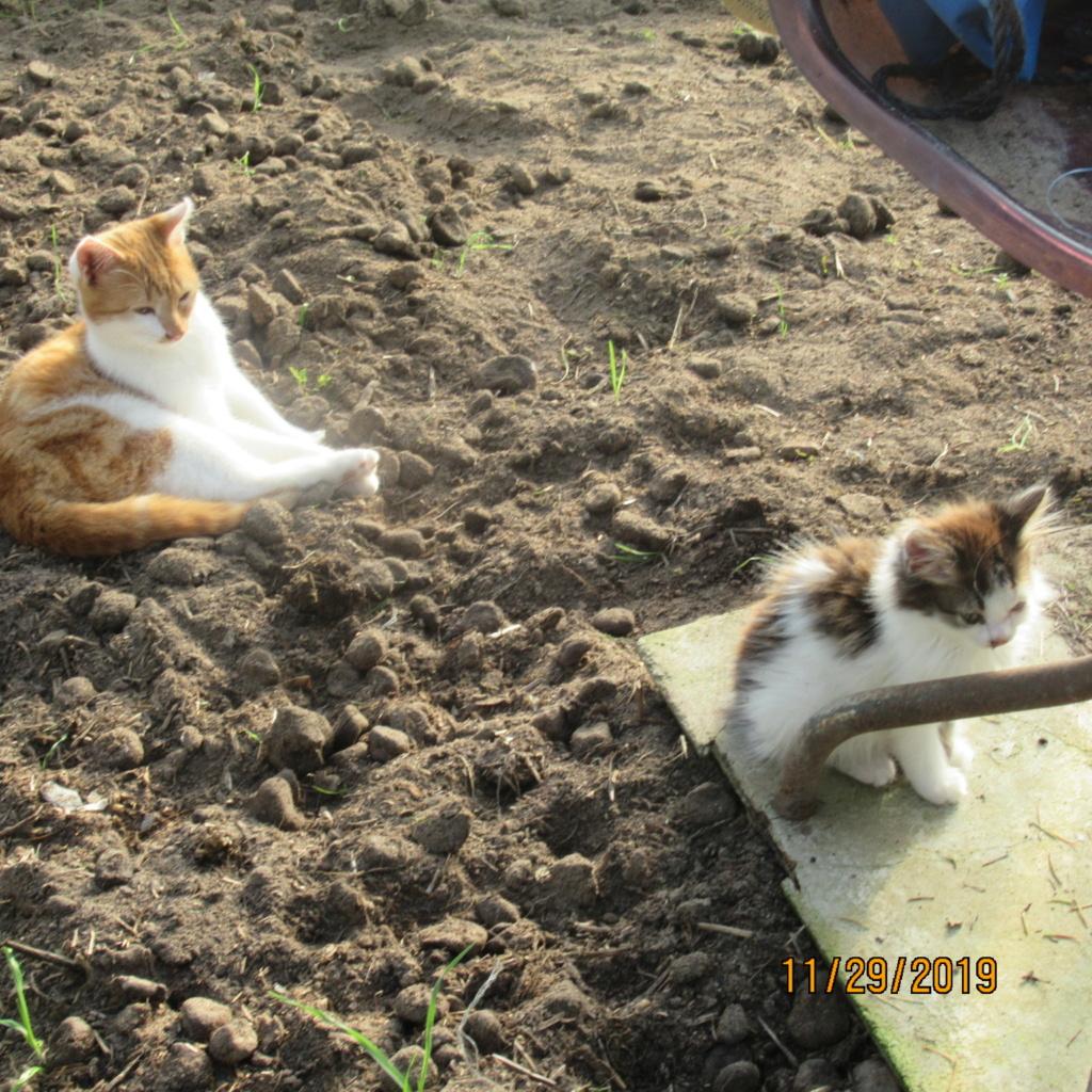 pour les amoureux des chats - Page 18 Img_2928
