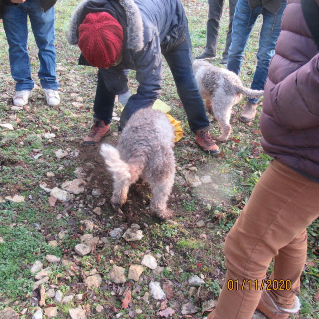 Séance de cavage dans une truffière dans la région de Loudun (86) Img_2950