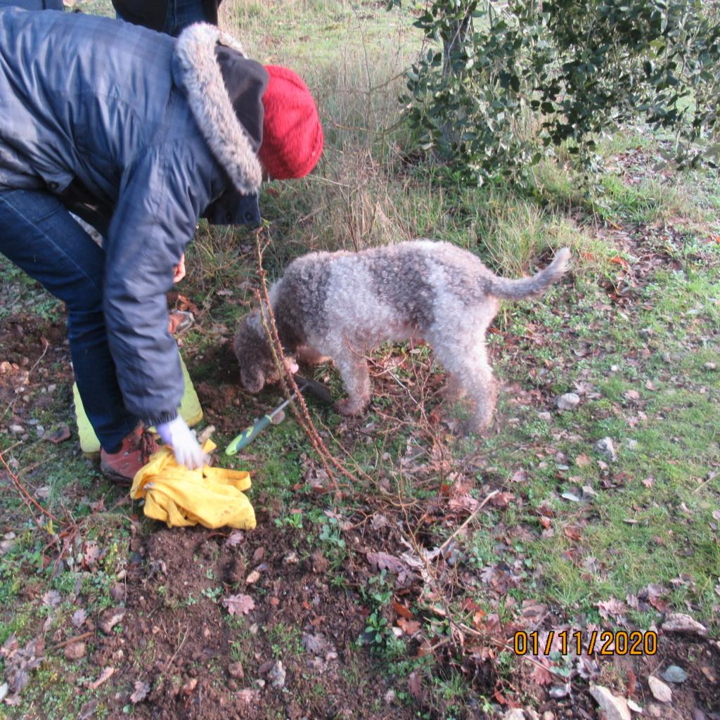 Séance de cavage dans une truffière dans la région de Loudun (86) Img_2951