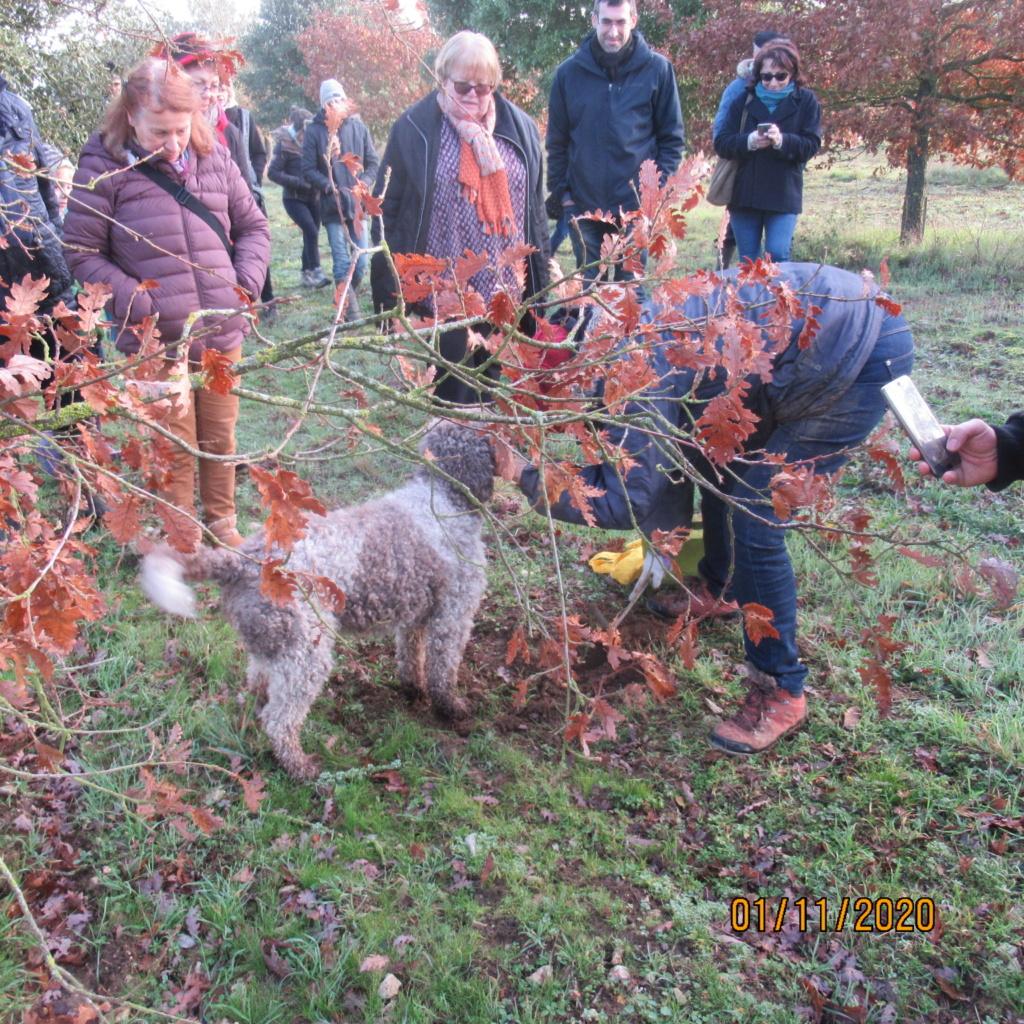 Séance de cavage dans une truffière dans la région de Loudun (86) Img_3016