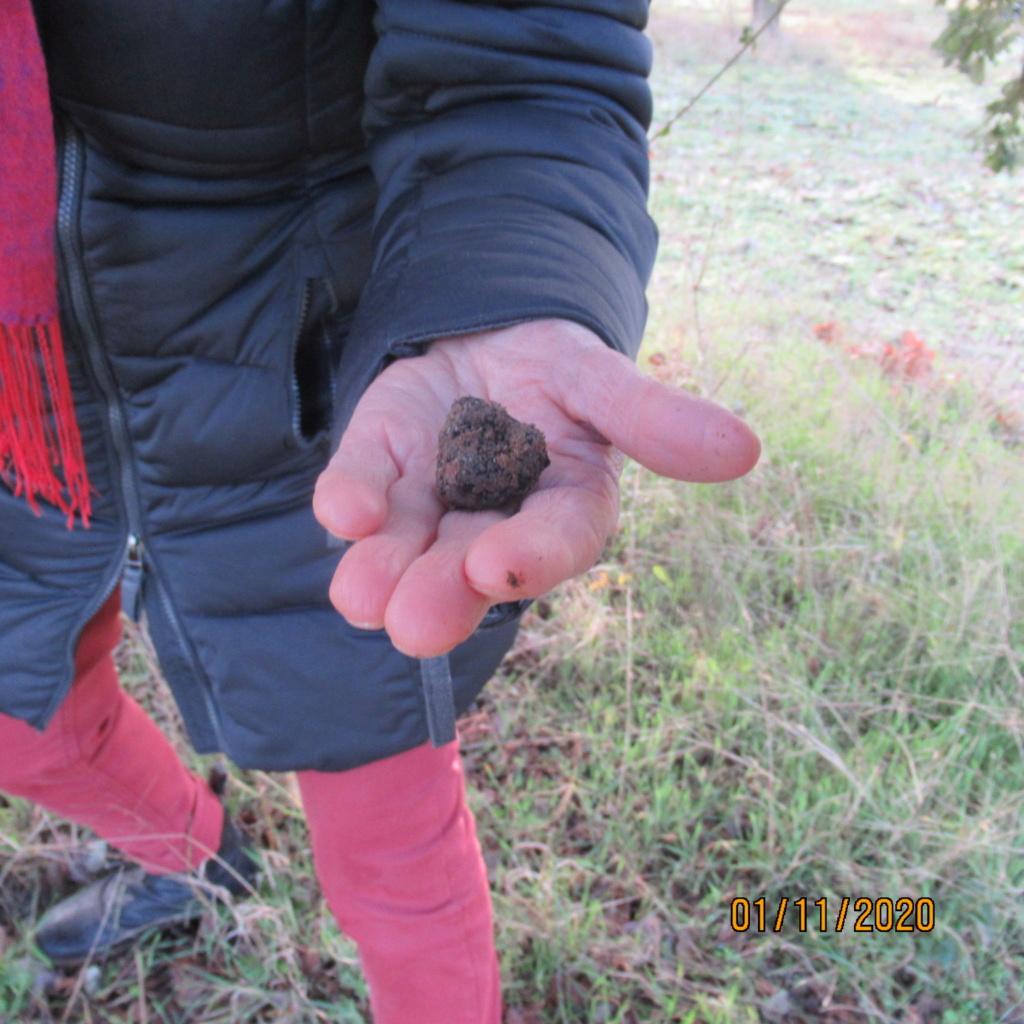 Séance de cavage dans une truffière dans la région de Loudun (86) Img_3018