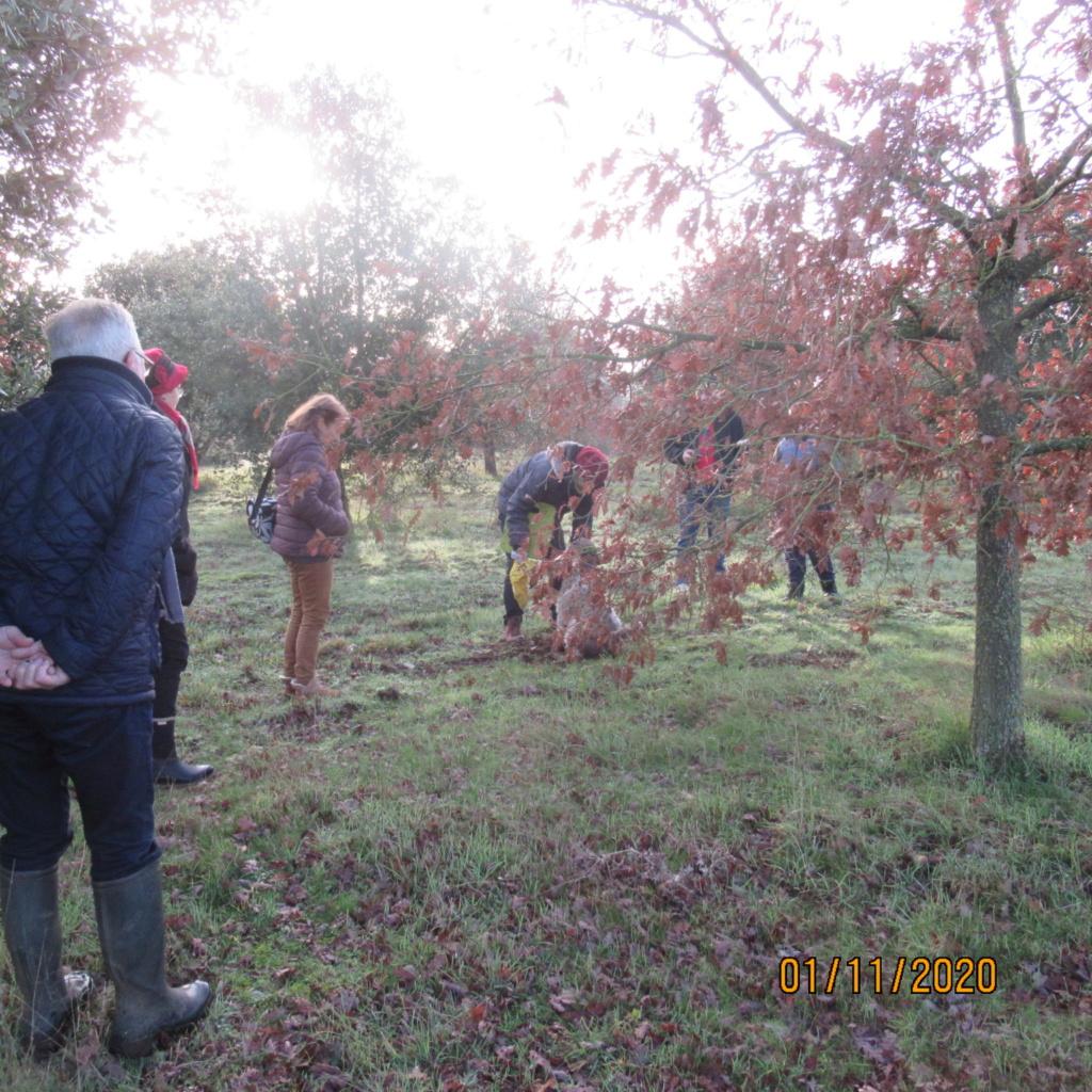 Séance de cavage dans une truffière dans la région de Loudun (86) Img_3022