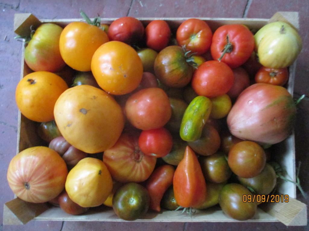 Tomates 2019 - Page 15 Img_3411