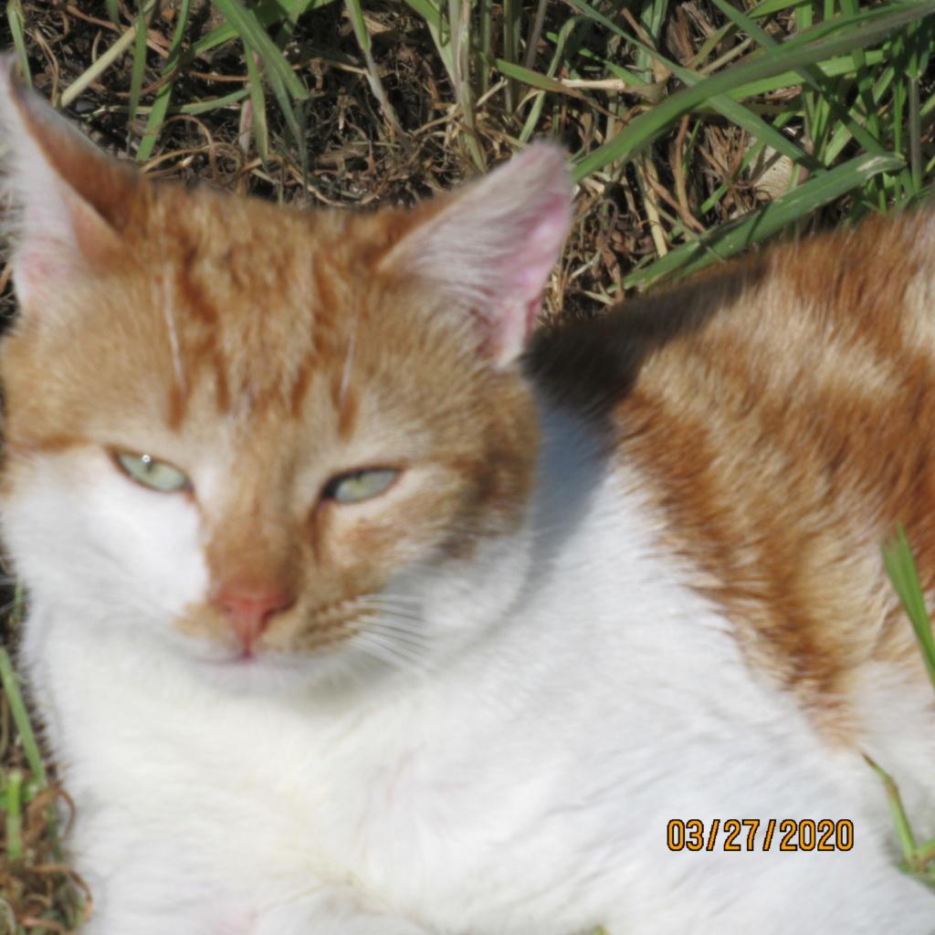 pour les amoureux des chats - Page 22 Img_3419