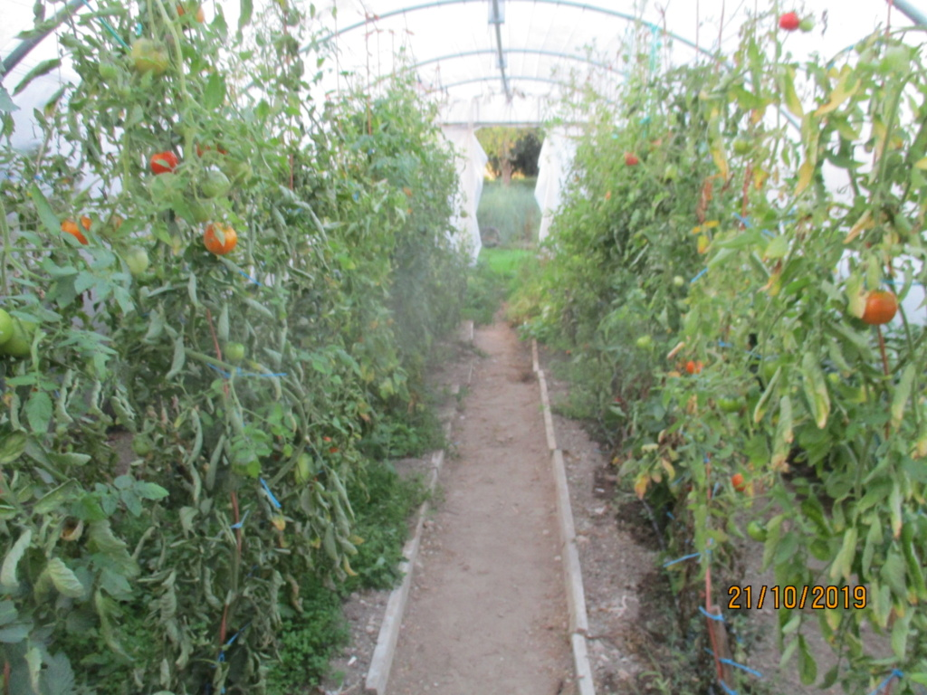 Tomates 2019 et 2020 - Page 16 Img_3822