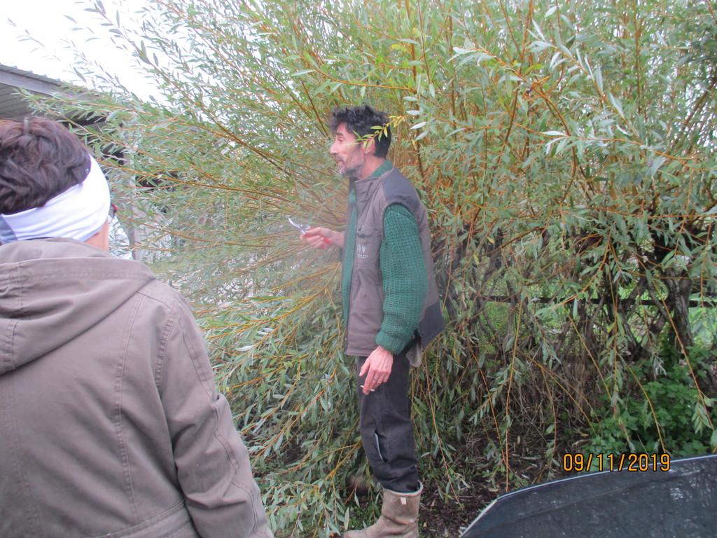L'osier au jardin : plessis - haie végétale - cabane - tipi - Page 3 Img_3929