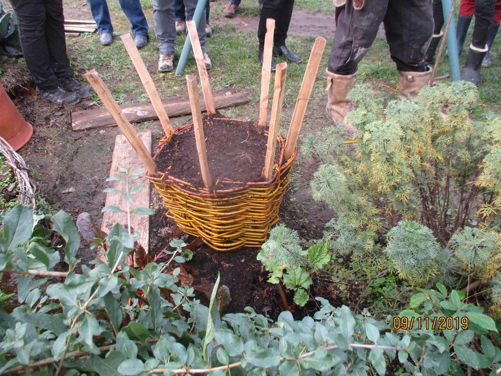 L'osier au jardin : plessis - haie végétale - cabane - tipi - Page 3 Img_3940