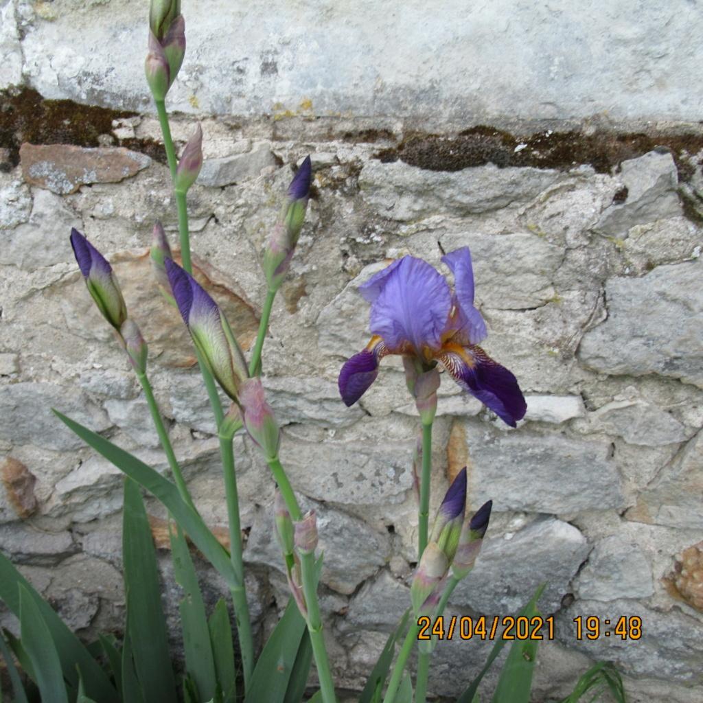 Floraison d'iris de 2017 ....... à 2021 - Page 20 Img_5737