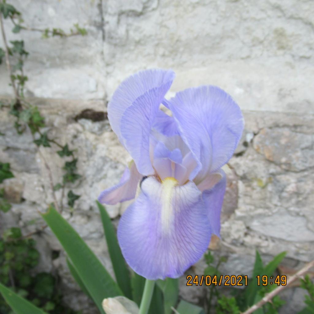 Floraison d'iris de 2017 ....... à 2021 - Page 20 Img_5738
