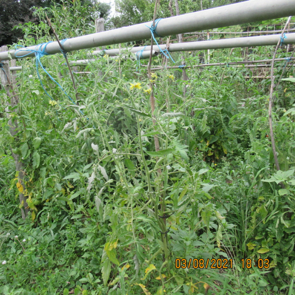 Tomates 2019 - 2020 et 2021 - Page 28 Img_6630