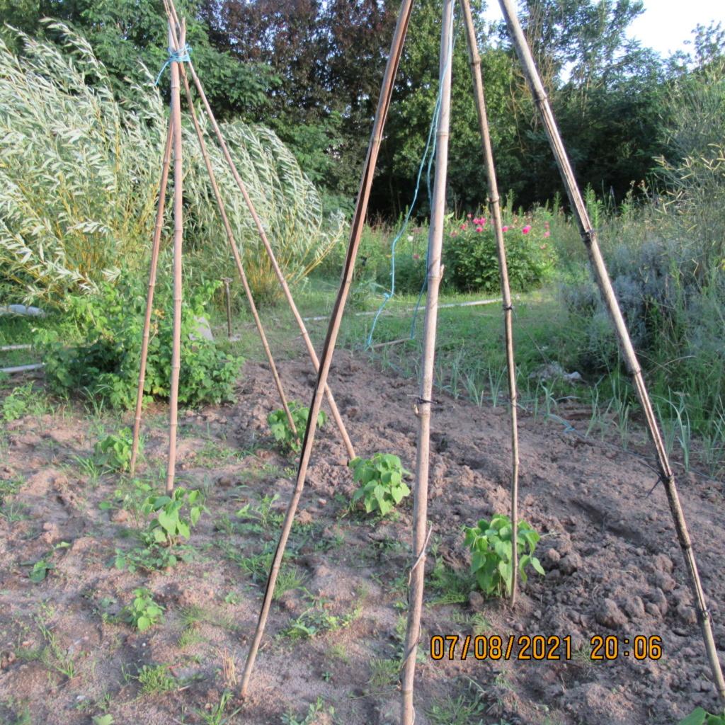 L'osier au jardin : plessis - haie végétale - cabane - tipi - Page 4 Img_6823