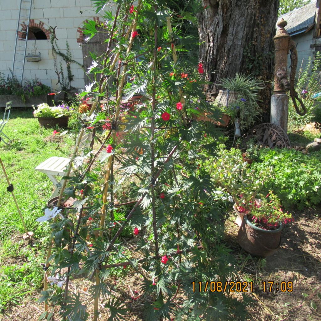 L'osier au jardin : plessis - haie végétale - cabane - tipi - Page 4 Img_6824