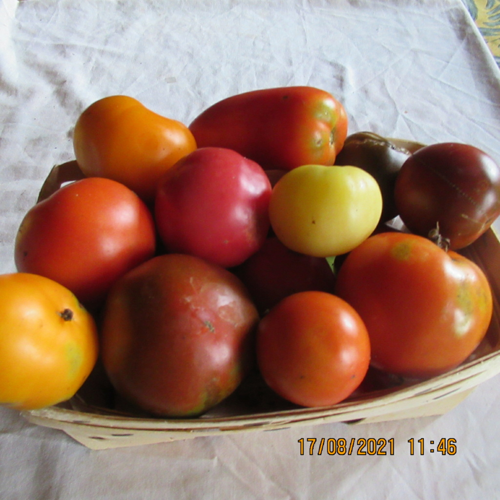 Tomates 2019 - 2020 et 2021 - Page 30 Img_6926