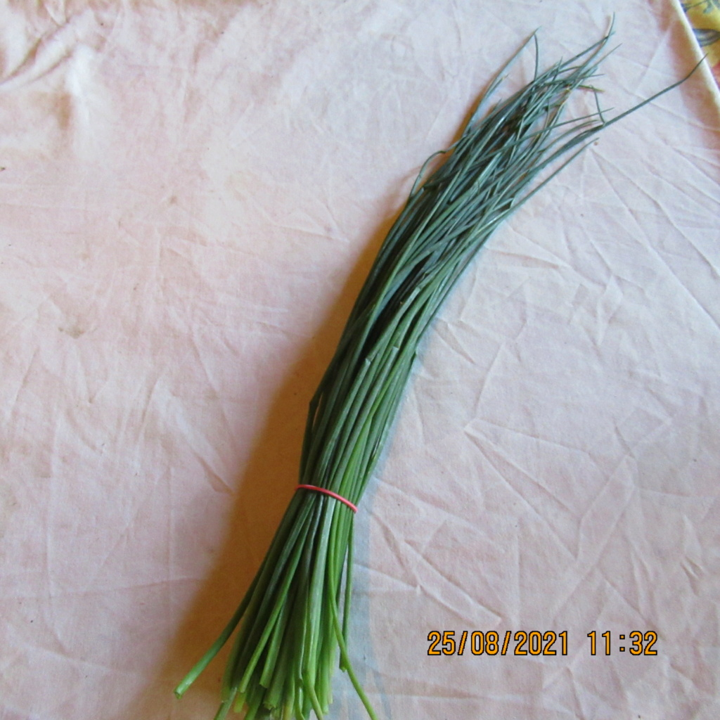 Les plantes aromatiques  Img_6944