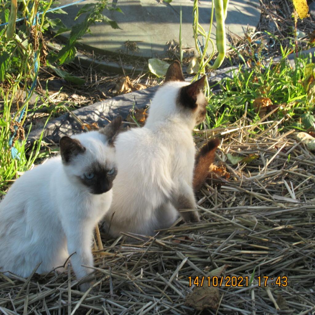 pour les amoureux des chats - Page 13 Img_7238