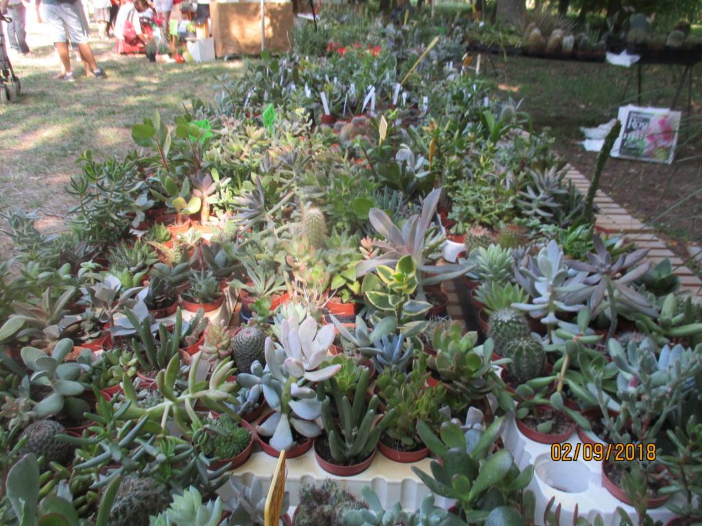 Fête des Plantes au Plessis-Grammoire (près d'Angers) 49 - Page 3 Img_9523