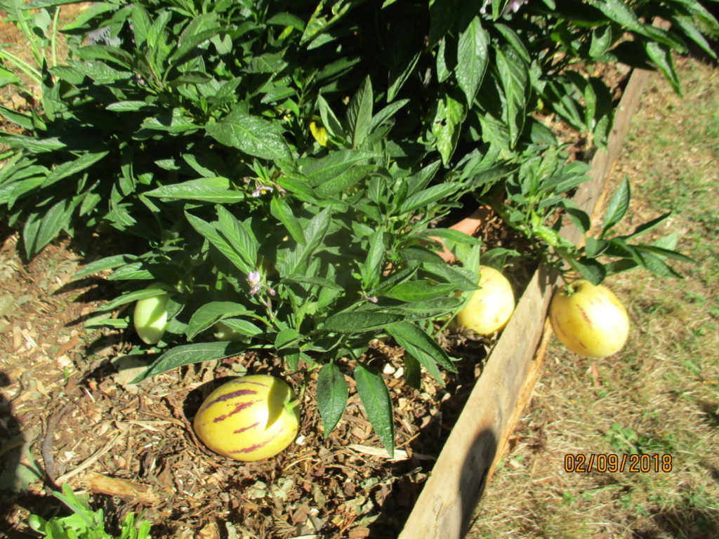 le poire melon - Page 4 Img_9527