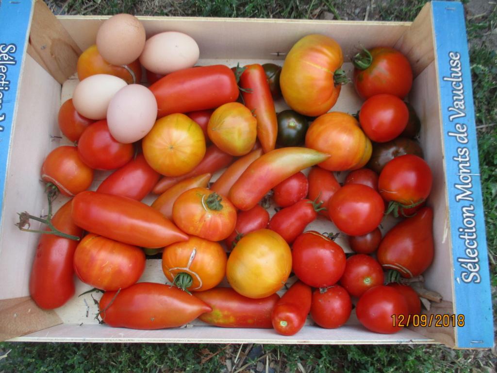 Tomates 2018 - Page 15 Img_9610