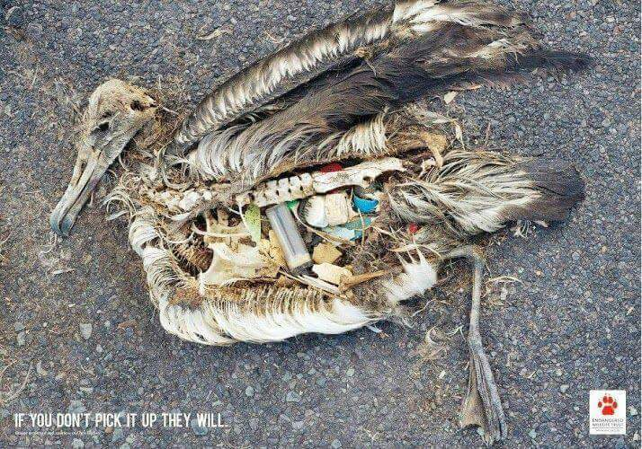 Stark photos show what you and I have done to our planet (viewer discretion advised) 13221610