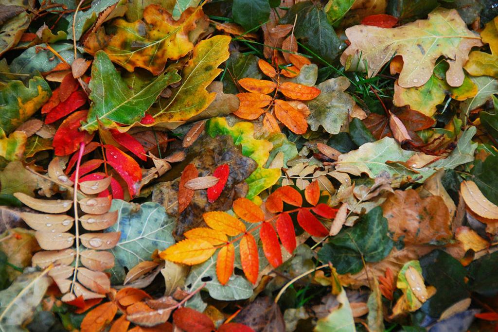 Équinoxe d'automne 2020 Autumn11
