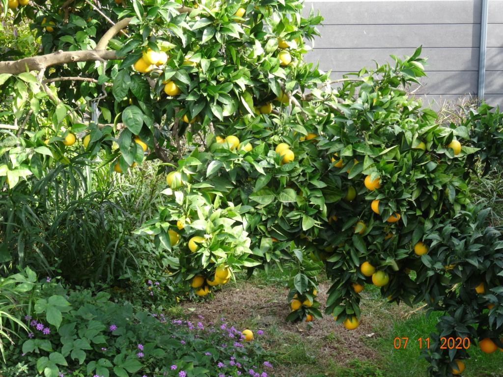 Mon jardin 2020 - Page 12 Dsc00912