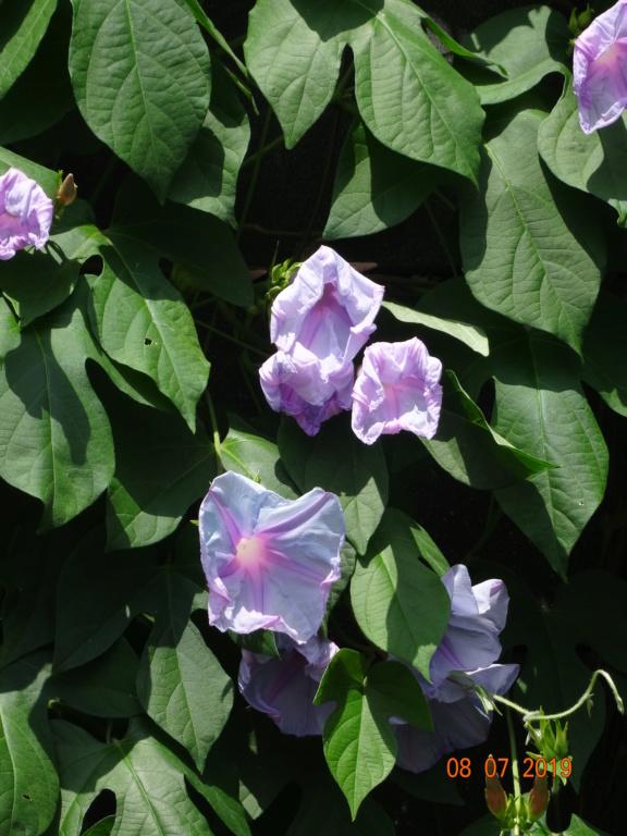 Vos plantes, fleurs, jardin !  - Page 25 Dsc01110