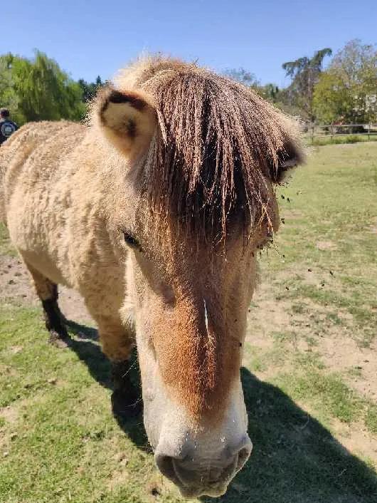 Mutilations de chevaux Poney10