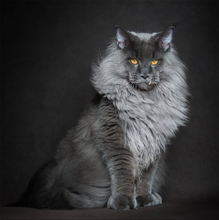 Cait's Kitty Profiles Img_6710